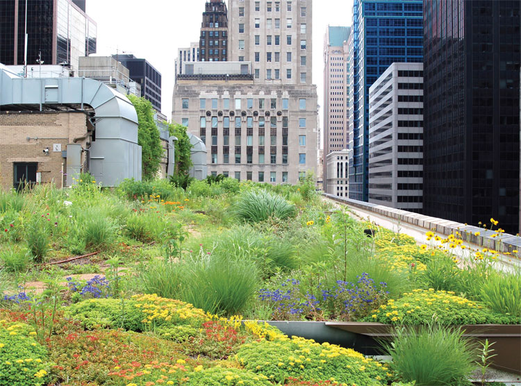 Nice Green Roof On Chicagou0027s City Hall. City Of Chicago